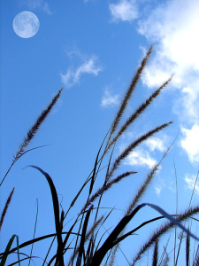 Skywards by aussiegall / Louise Docker, via Flickr.